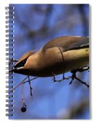 Stretch Spiral Notebook