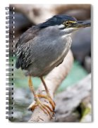 Striated Heron Spiral Notebook