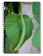Stringbeans On The Vine Spiral Notebook