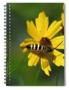 Striped Bee On Wildflower Spiral Notebook
