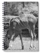 Striped Deer In Black And White Spiral Notebook
