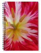 Striped Flaming Tulips. Hot Pink Rio Carnival Spiral Notebook