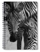 Stripes - Zebra Spiral Notebook