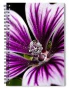 Stripped Blossom Spiral Notebook