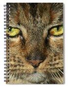 Stubbs 1 Spiral Notebook