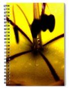 Study Of A Golden Cup Flower 5 Spiral Notebook