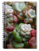 Succulent Rain Spiral Notebook