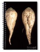 Sugar Beet Breeding Spiral Notebook