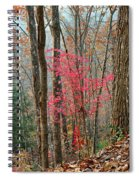 Sumac In Morning Light At Cumberland Falls State Park Spiral Notebook