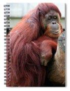Sumatran Orangutan Spiral Notebook