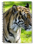 Sumatran Tiger Portrait  Spiral Notebook