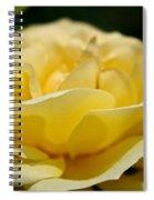 Summer Loves A Rose Spiral Notebook