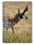 Summer Pronghorn Rain Spiral Notebook