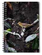 Summer Tanager Lady Spiral Notebook