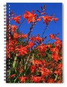 Montbretia, Summer Wildflowers Spiral Notebook