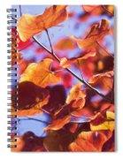 Summers Palette Spiral Notebook