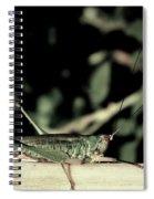 Sun Bathing Spiral Notebook