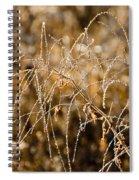 Sun Catcher Spiral Notebook