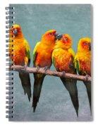 Sun Conures Spiral Notebook