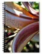 Sun Dappled Spiral Notebook