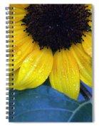 Sun Flower Spiral Notebook