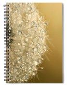 Sun Sparkled Dandy Spiral Notebook
