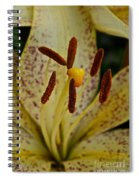 Suncrest Spiral Notebook
