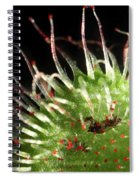 Sundew Eating A Fly Spiral Notebook