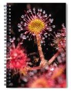 Sundew, Vancouver Island, British Spiral Notebook