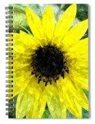 Sunflower 5 Sf5wc Spiral Notebook