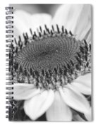 Sunflower Bloom Black And White Spiral Notebook
