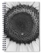 Sunflower Center Black And White Spiral Notebook