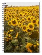 Sunflower Field Spiral Notebook