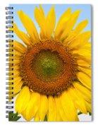 Sunflower On Blue Spiral Notebook