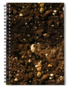 Sunflower Seedling Growth Sequence Spiral Notebook