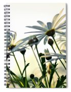 Sunlight Behind The Daisies Spiral Notebook