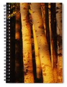Sunlight On Aspen Trees, Twin Falls Spiral Notebook