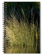 Sunlight On Grass Original Spiral Notebook
