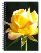 Sunlight On Yellow Rose Spiral Notebook