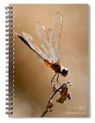 Sunlight Through Golden Wings Spiral Notebook