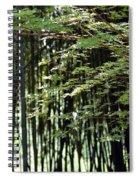 Sunlit Bamboo Spiral Notebook