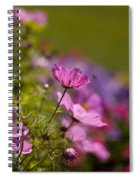 Sunlit Cosmos Spiral Notebook