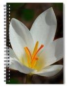 Sunlit Crocus Spiral Notebook