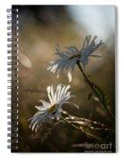 Sunlit Daisies Spiral Notebook