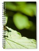 Sunlit Dragonfly Spiral Notebook