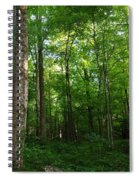 Sunlit Forest Spiral Notebook