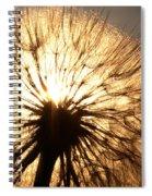 Sunlit Goatsbeard Seed Pod In Scenic Saskatchewan Spiral Notebook
