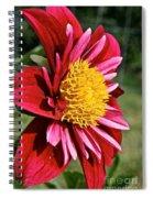 Sunny Center Spiral Notebook