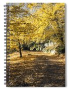 Sunny Day In The Autumn Park Spiral Notebook