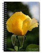 Sunrise Rosebud Spiral Notebook